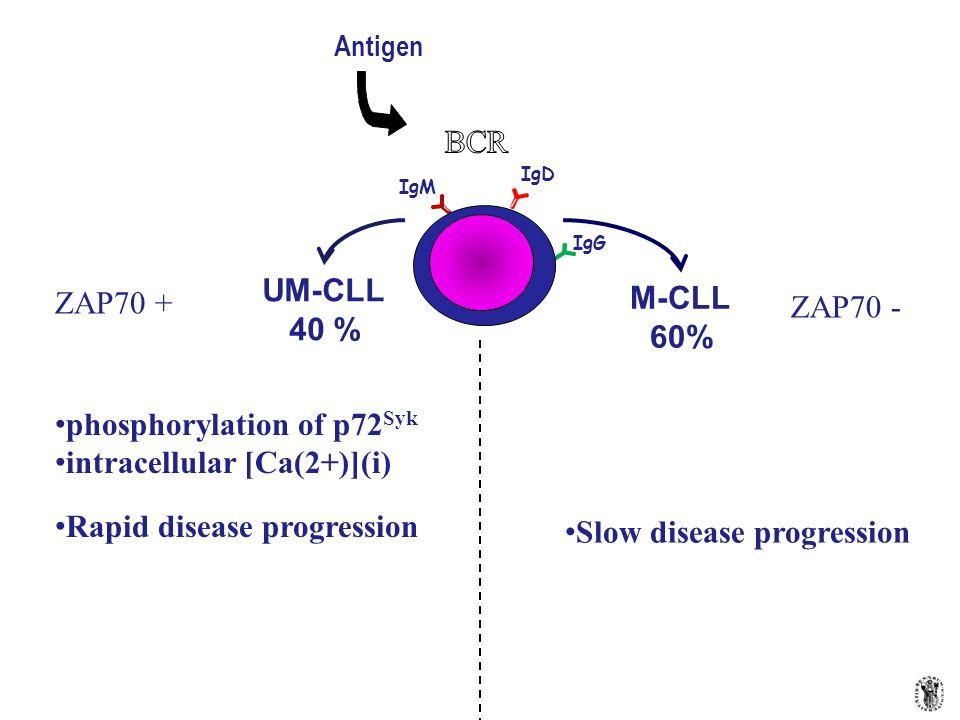 phosphorylation of p72Syk intracellular [Ca(2+)](i)